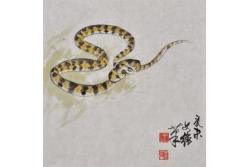 王文强动物画作品十二生肖之《蛇》
